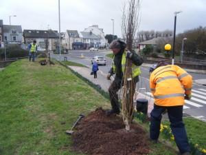 Photo of tree planting.