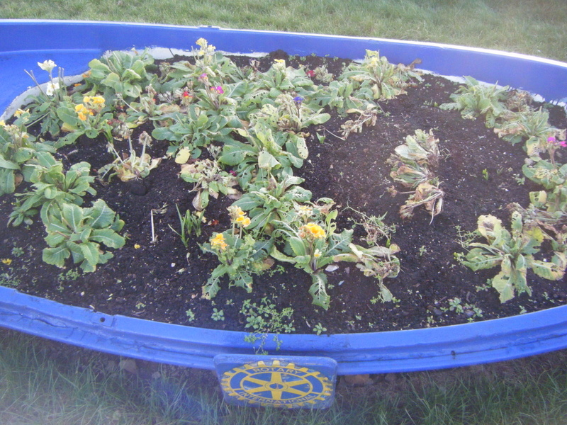 Plants in boat destroyed by vine weevil infestation