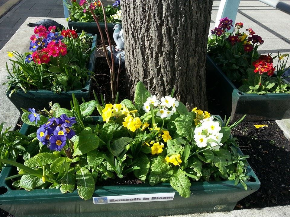 Spring flowers in troughs round trees in the Parade