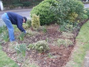 Weeding flower bed